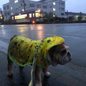 9月25日の朝散歩は雨と京都御所の続き