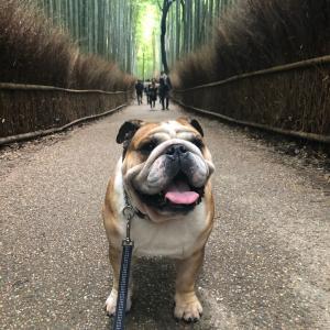 嵐山でのんびりお散歩③竹林の道編