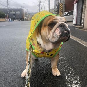 1月24日の朝散歩も雨がパラパラ