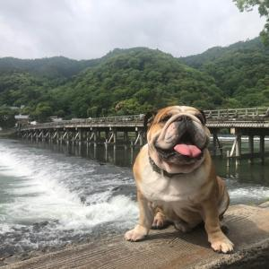 5月8日は嵐山でのんびり朝散歩