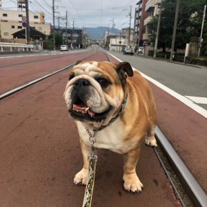 6月22日の朝散歩