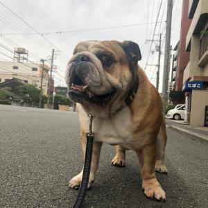 6月25日の朝散歩