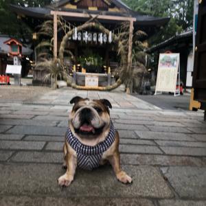 7月4日の朝散歩と護王神社