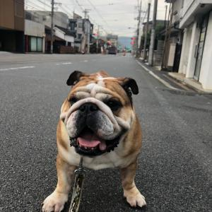 7月6日の朝散歩