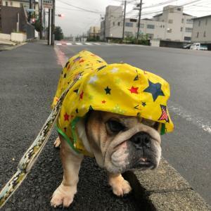 7月8日の朝散歩は小雨