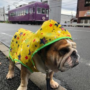 7月16日の朝散歩も雨