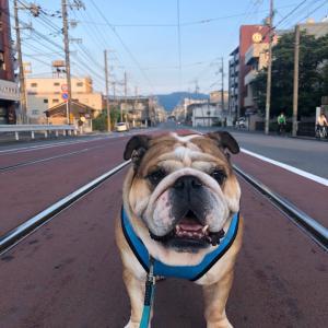 7月29日の朝散歩