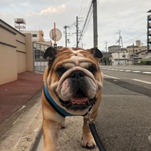 7月30日の朝散歩