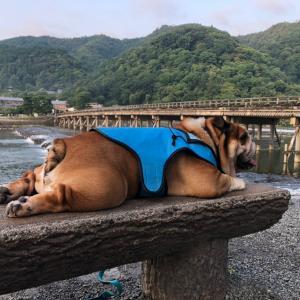 8月1日は嵐山で朝散歩