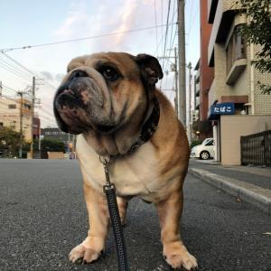 9月24日の朝散歩