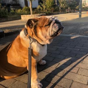 10月19日の朝散歩は公園まで