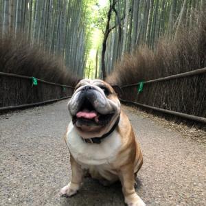 嵐山でのんびり朝散歩③竹林の道