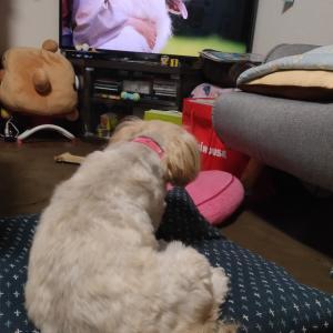 テレビ犬と前髪