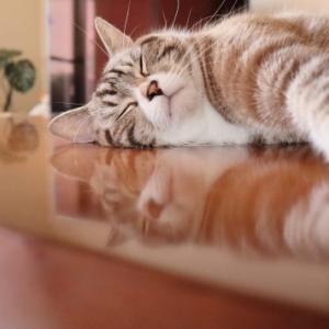 睡眠負債はダメだよね