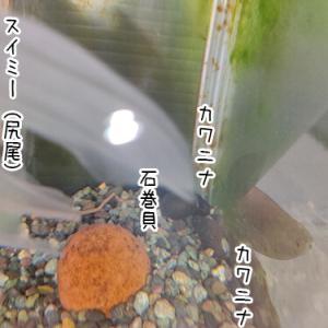 貝の集貝。