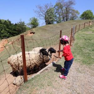 神野山めえめえ牧場で羊さんにせんべいをあげる(1)