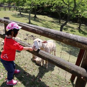 神野山めえめえ牧場で羊さんにせんべいをあげる(2)