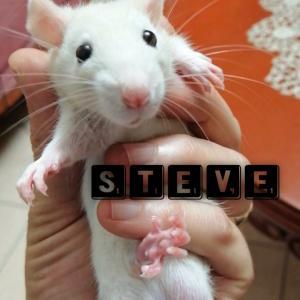 棄て犬ならぬ、棄てネズミのスティーブ君。長髪のカルメンは、今日で見納め。
