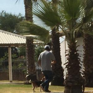 犬の「出張・訓練教室」で、すごいやる気を見せた、チビ爺さん。