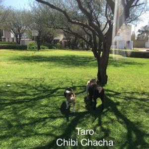 キッザニア発祥の国メキシコで、子供の八百屋さんが進化した。懐かしい、犬たちの写真。