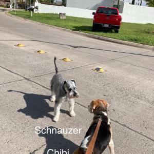 普通に大騒ぎだった独立記念日の翌日は、犬のお世話係が、大繁盛。
