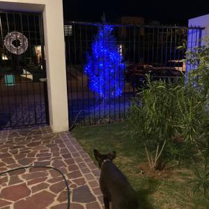 クリスマスツリーは、こんな感じに。強盗じゃなくて、ひったくりだった。