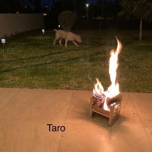 焚き火は、けっこう楽しい。犬のお散歩係4匹で150ペソは、過去最高・激安!