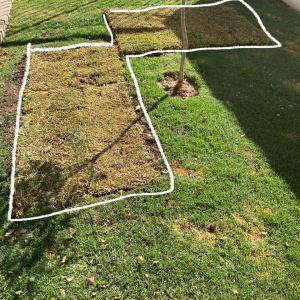 芝生を張り替え、網貼って、、乳母車で、お散歩。至れり尽せりされるチビ爺さん。