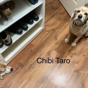 レオン市の、トラック運転手襲撃事件。雷が怖い、太郎とチビ。