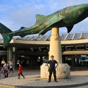 沖縄旅行3日目 美ら海水族館