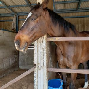 自由配馬(4鞍目)手より足が目立つ乗り方を