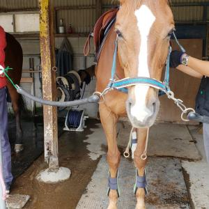 自由配馬(7鞍目)【人が先に行かないように】する馬