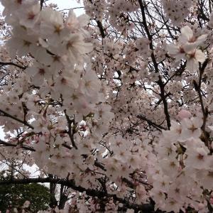 ドラゴン桜 その1