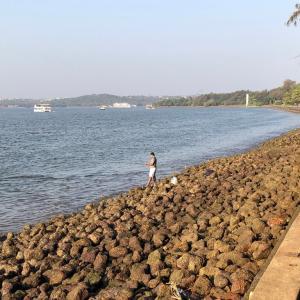 インド釣査259 GOAの成果