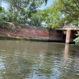 インド釣査274 -感染大国より釣果報告-