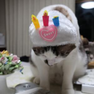バースデーケーキてんちゃん