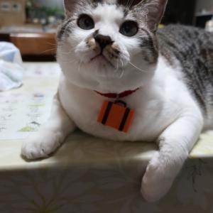 """""""絹に描く猫絵モデル大募集!のお願い!追記あり!再追記あり!"""""""