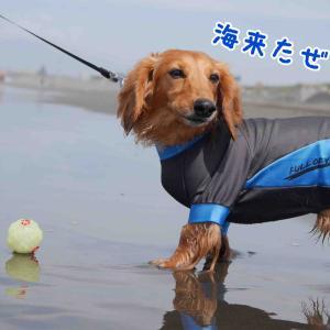 新しいラッシュガードを着て海遊び