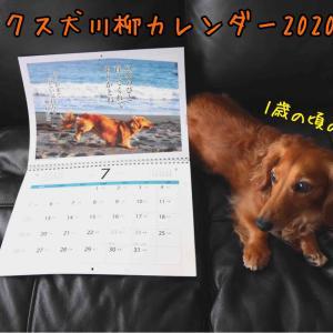 『ダックス犬川柳カレンダー』2020年7月
