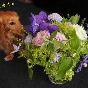 カイはお花が好き?(^^)