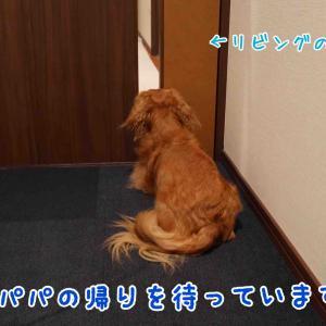 【忠犬カイシリーズ】つぶれてるよ~
