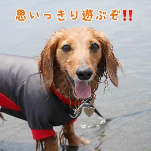 カイはやっぱり海が好き!!