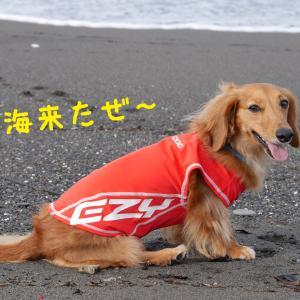 ラッシュガードを着て海散歩