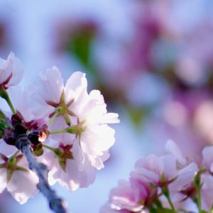 花の旬 魚の旬 大蒜の旬