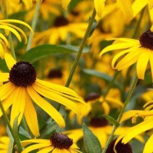 今日のマヤ暦「公平に接しましょう」KIN60 黄色い太陽・赤い空歩く人・音8