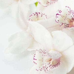 今日のマヤ暦「心の内にある思いに目を向けましょう」KIN62 白い風・赤い空歩く人・音10