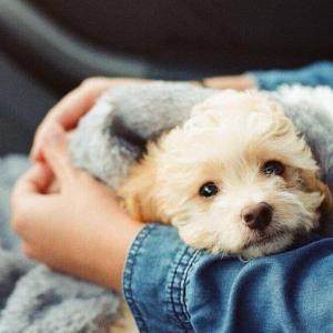 今日のマヤ暦「愛するもの・ことを持ちましょう」KIN70 白い犬・白い世界の橋渡し・音5