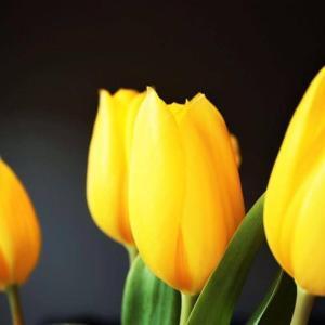 今日のマヤ暦「情報を絞りましょう」KIN72 黄色い人・白い世界の橋渡し・音7 & 来週のポイント