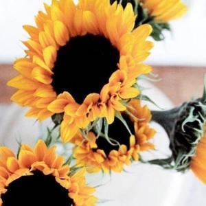 今日のマヤ暦「第3の選択肢を持ちましょう」KIN80 黄色い太陽・青い嵐・音2
