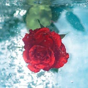 今日のマヤ暦「心の扉を開いておきましょう」KIN81 赤い龍・青い嵐・音3
